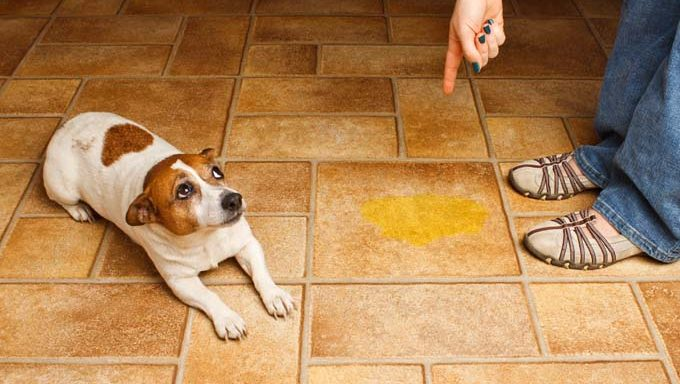 How to Choose the Right Dog Training Space