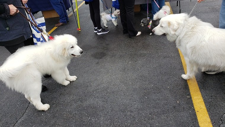 dogs meeting