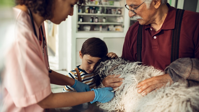 Close up of a veterinarian having a medical exam on a dog