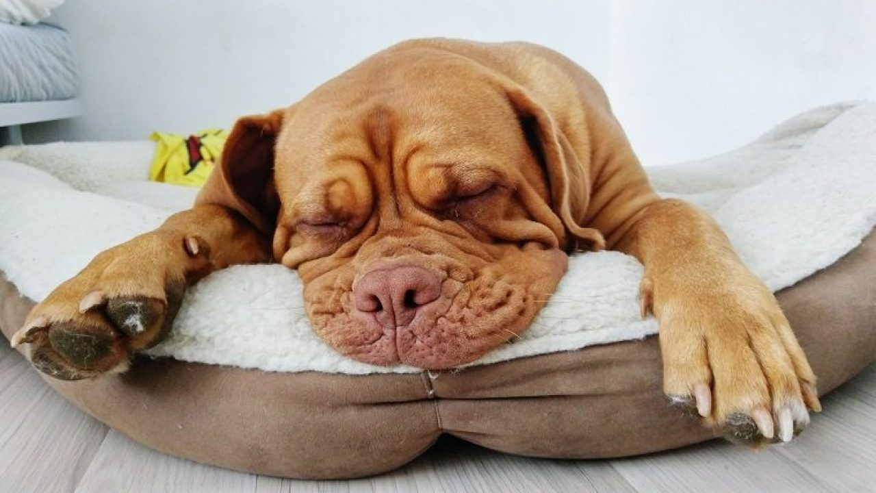 Picture of: Dog Beds Everything You Need To Know Dogtime