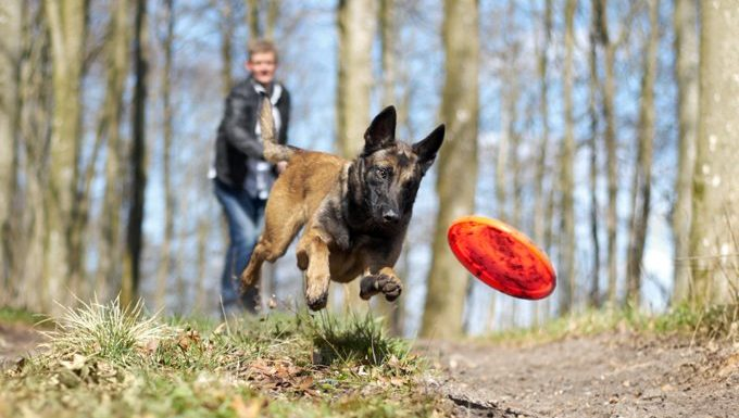 man throws frisbee for dog