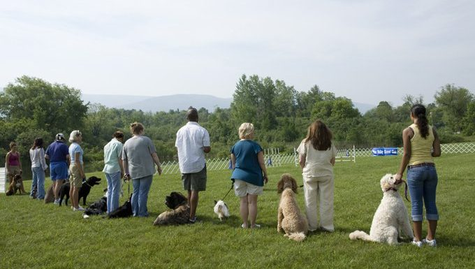 dogs in appropriate training class without punishment
