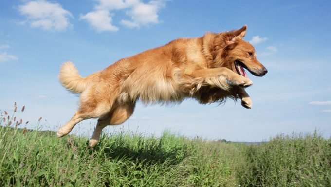 dog jumping over grass with garden chemicals