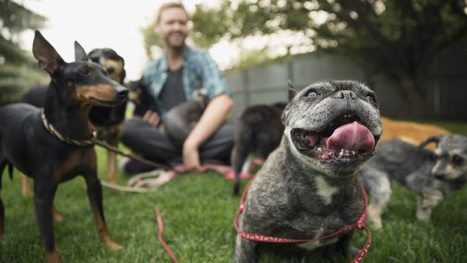 man sitting with dogs as french bulldog smiles at camera