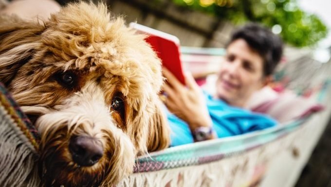 dog with woman in hammock