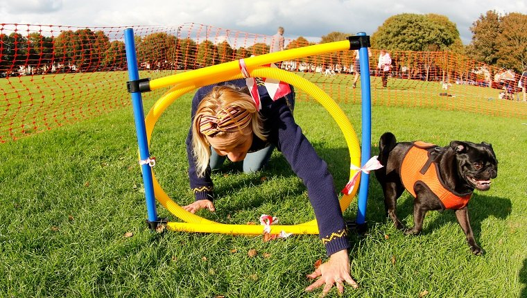 Pet owner tries to encourage her pug to go through obstacle course at Victoria Park, Worthing