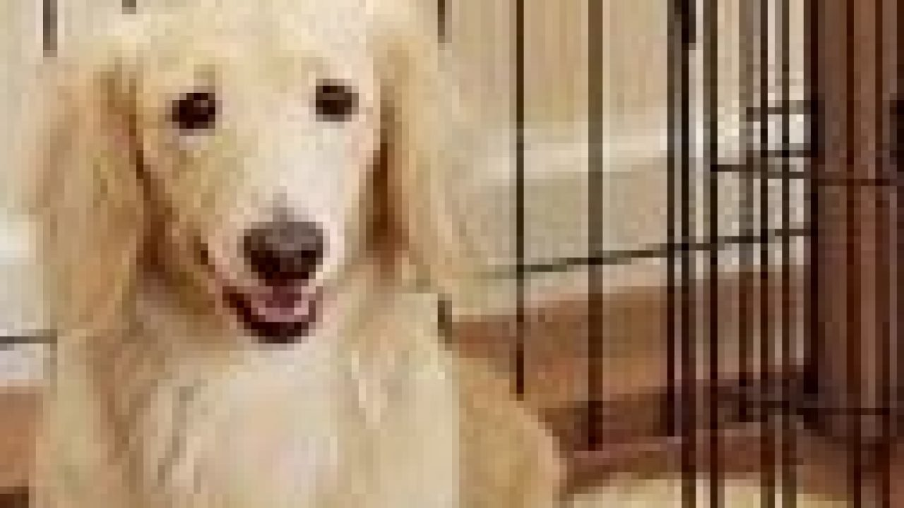 Crate Training And Housebreaking Made Easy House Training A Puppy Dogtime