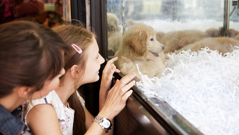 Cute girl near to window with her mother looking at puppy for adoption