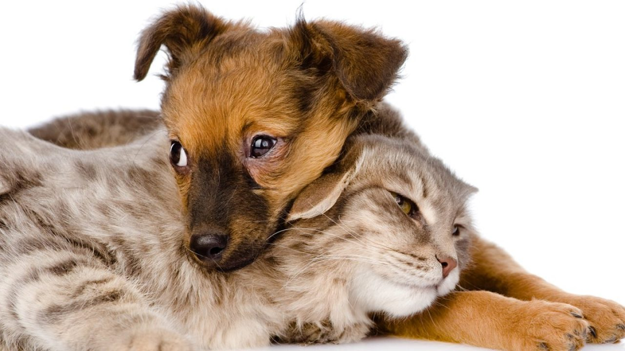 Thinking about fostering an adoptable cat or dog? - Dogtime