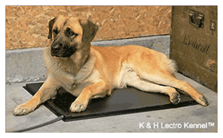 lectro kennel