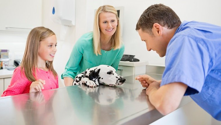 Veterinarian and owners examining dog in vet's surgery