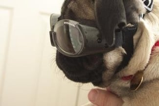 http://www.doggles.com/doggles.html