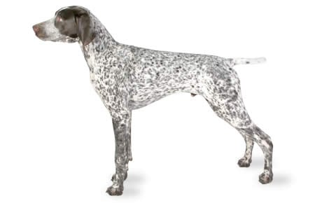 ... German Shorthaired Pointers Make Me Happy German Shorthaired Pointer Mug