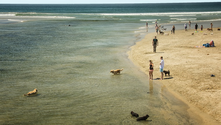 Dogs play in the water at a San Diego beach.