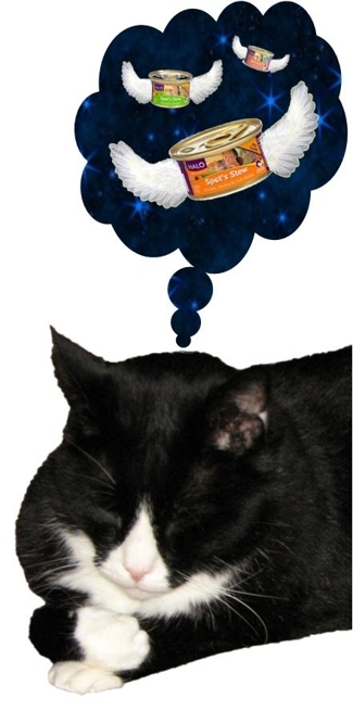 Braveheart dreaming of Spot's Stew for cats