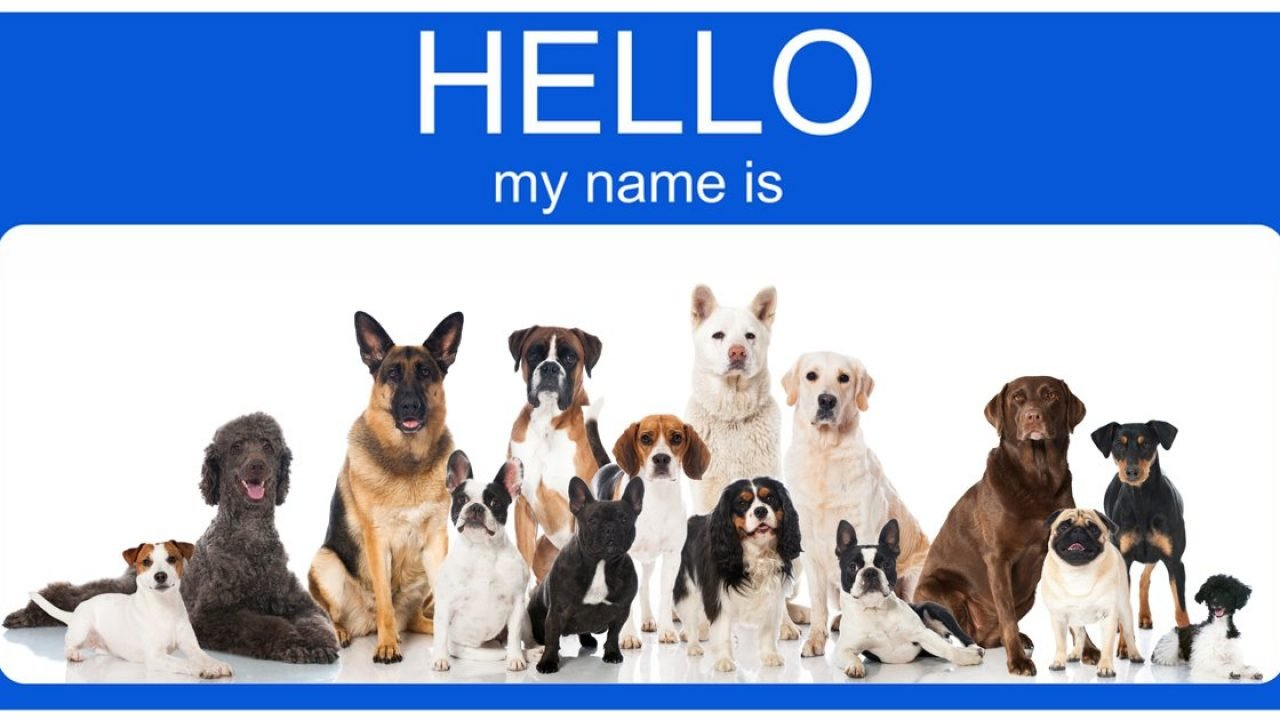 Top 100 Most Popular Male And Female Dog Names - Dogtime