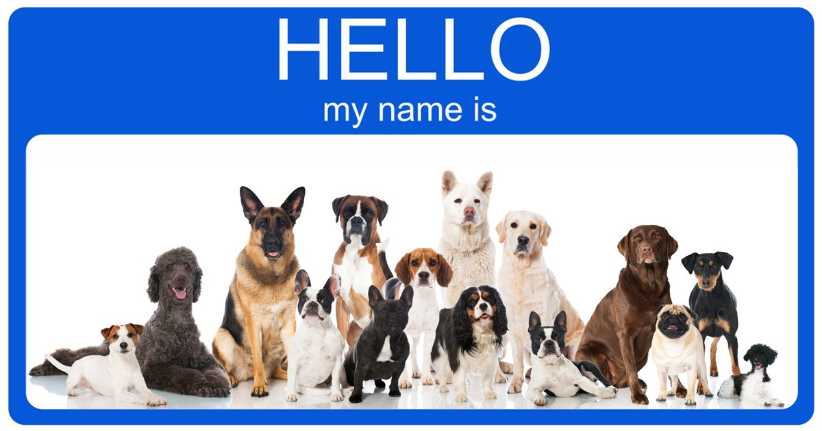 Top 100 Most Popular Male And Female Dog Names Dogtime