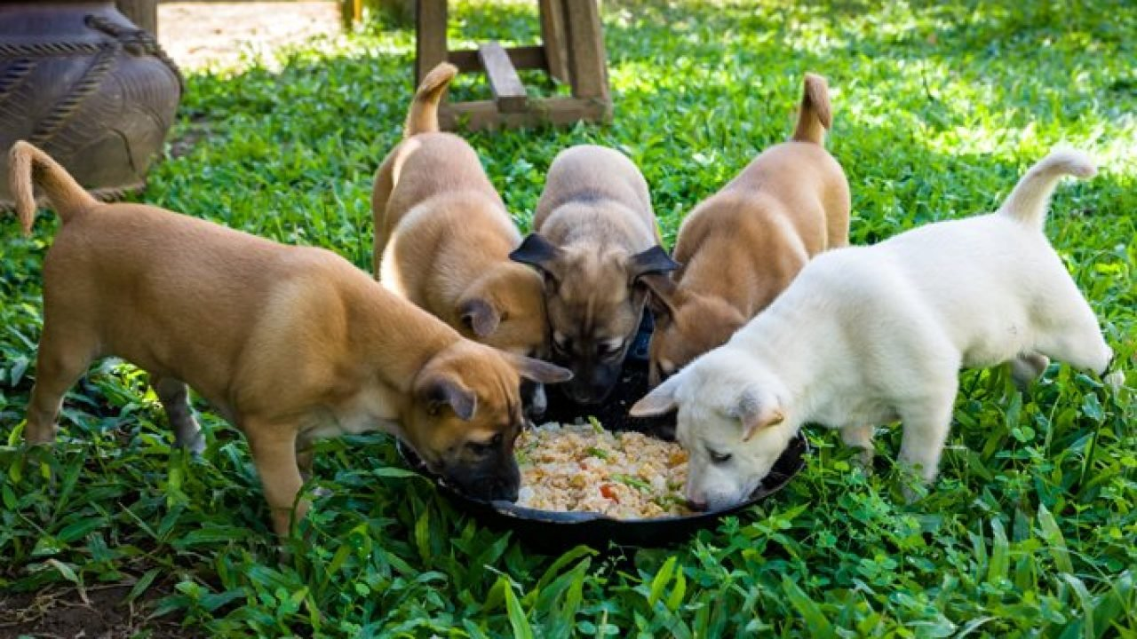 Feeding A Puppy - A Complete Guide - DogTime