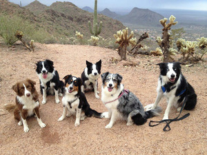 Agility trainer and six dogs crash in the desert - Dogtime