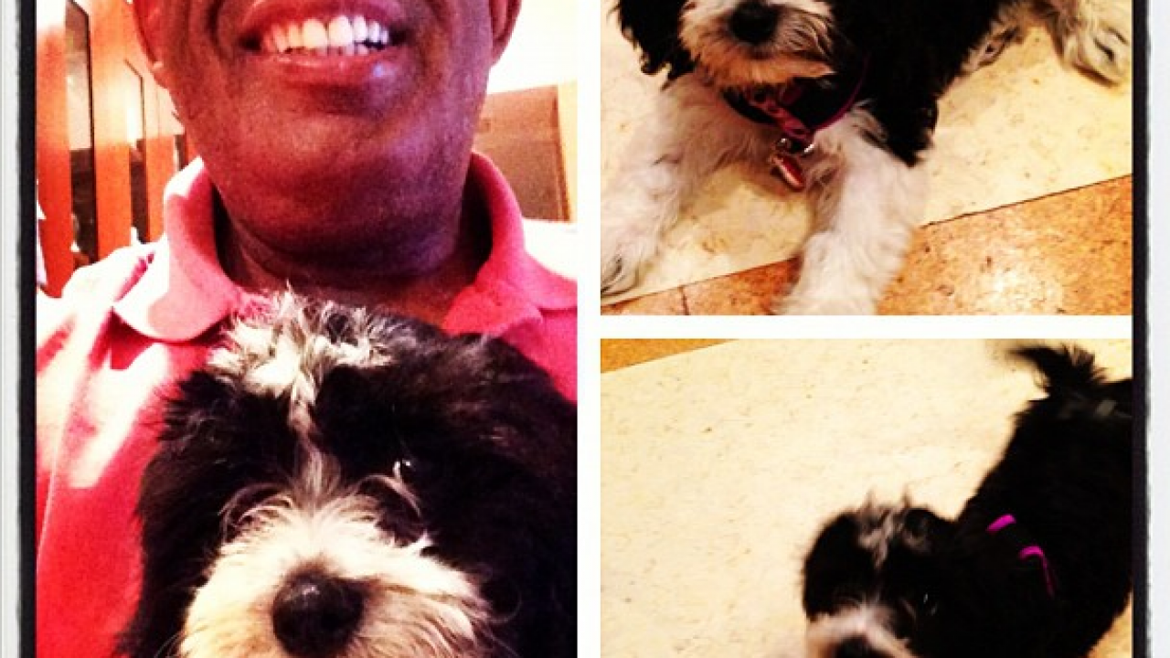 Al Roker rescues a puppy - Dogtime