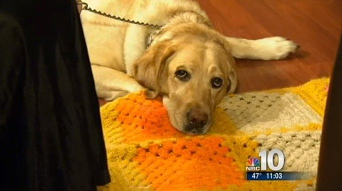 Guide Dog Saves Blind Woman From Burglars and gas leak