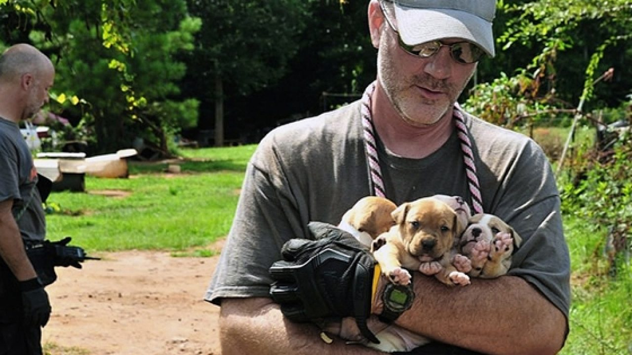 Over 350 dogs rescued in second-largest dogfighting bust in