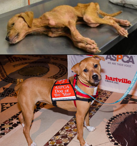 Meet The Aspca Dog Of The Year Xena Dogtime