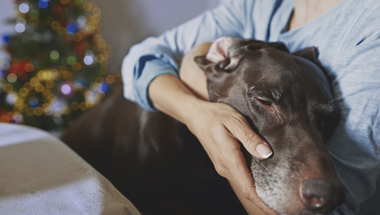 Woman hugging old dog at Christma time
