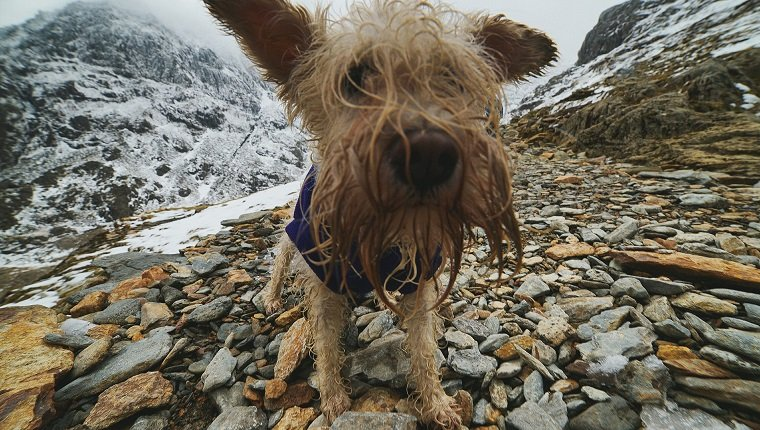 Hairy Dog On Rocky Mountain