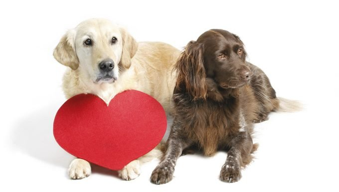 dogs lying down with a valentine's day heart