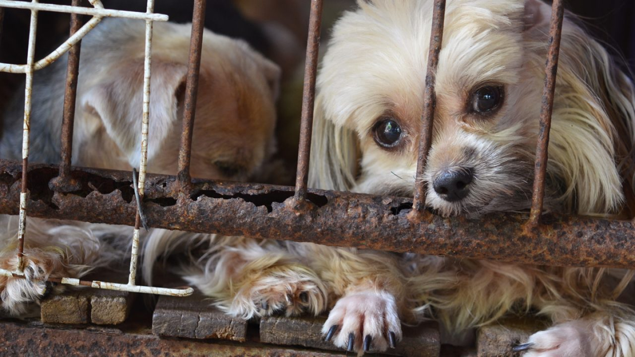"HSUS releases list of 101 ""problem"" puppy mills in the U S"