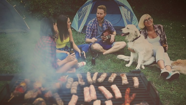 A few friends are in nature on camping. They are sitting on the green grass and having fun, redhead man is playing guitar, girls are drinking beer and they have a golden retriever like company. Meat are on grill, kebabs and sausages.