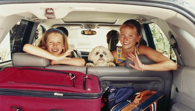 Behavior to watch for in your dog while traveling include excessive drooling, listlessness, uneasiness, and more — these could be signs of car sickness.