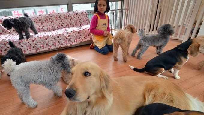 little girl surrounded by dogs of many breeds