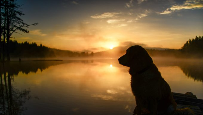 dog at sunset on lake