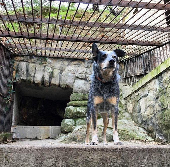 hiking-dogs-old-zoo-los-angeles