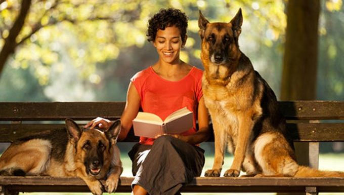 dog sitter with german shepherds on a bench