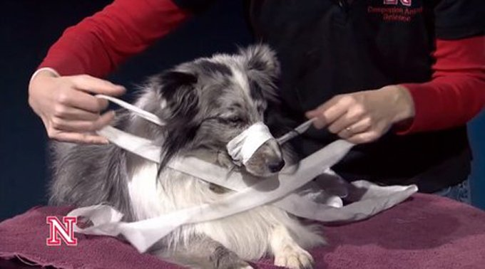 Make sure your dog is comfortable and relaxed. (Photo Credit: CompanionAnimals on YouTube)