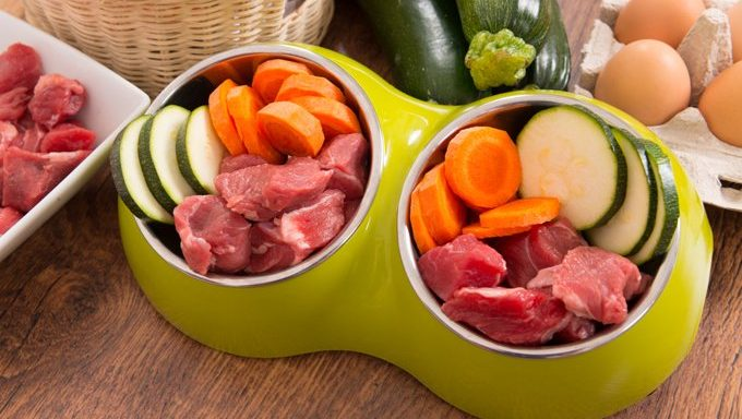dog bowl with meat and vegetables