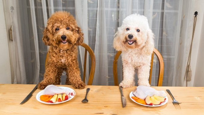 dogs at dinner table