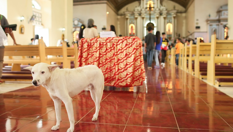 Parishioners in the Catholic Church in the Philippines after the prayer. Inside, the dog accidentally entered the temple