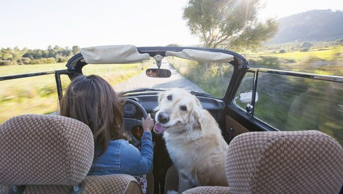 human and dog driving in convertible car