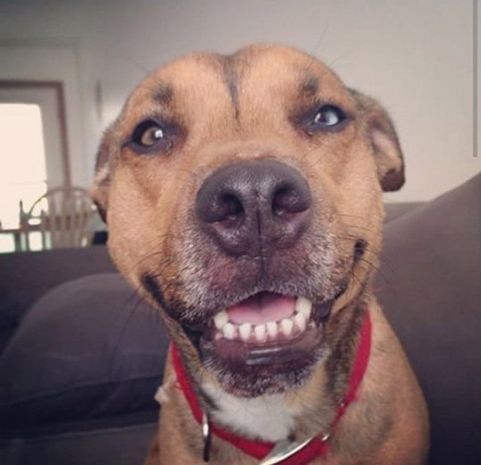 clean teeth dog - Baby Girl from Wooster OH