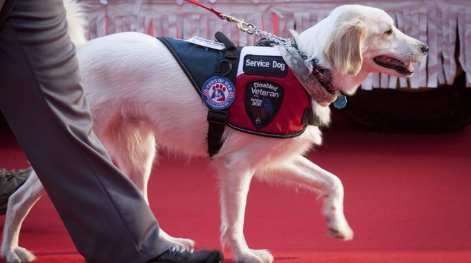 service dog in national service dog month