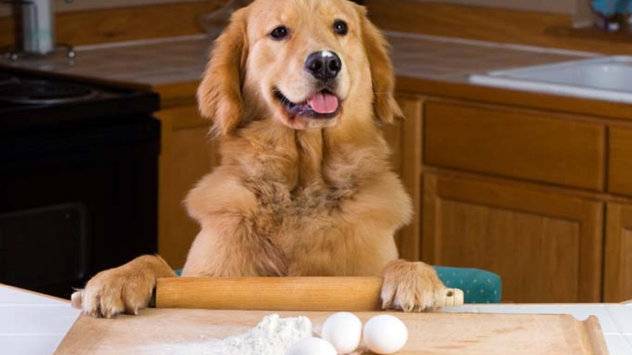 7 Homemade Dog Food & Treat Recipes For The Holidays - Dogtime