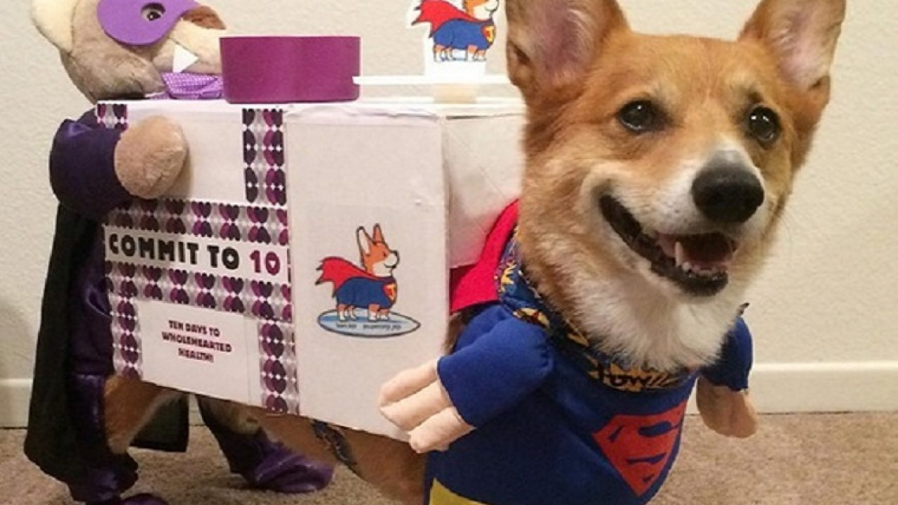 23 Awesome Dog Halloween Costume Ideas [Pictures]   Dogtime
