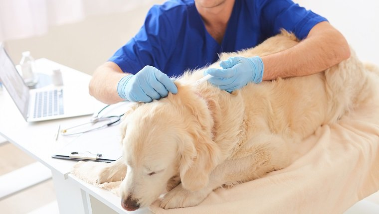 Experienced male vet is injecting the animal. He is sitting and calming down the dog. Man is serious