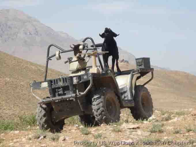 vetertans-day-military-dogs-2