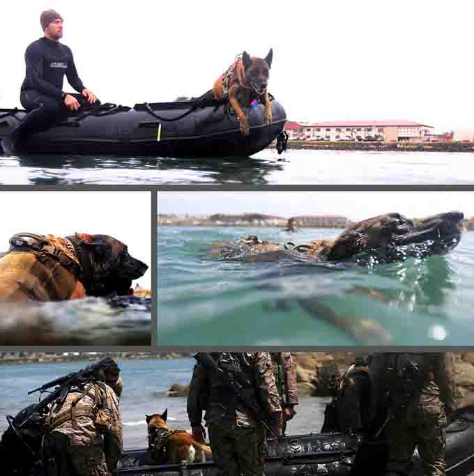 vetertans-day-military-dogs-4