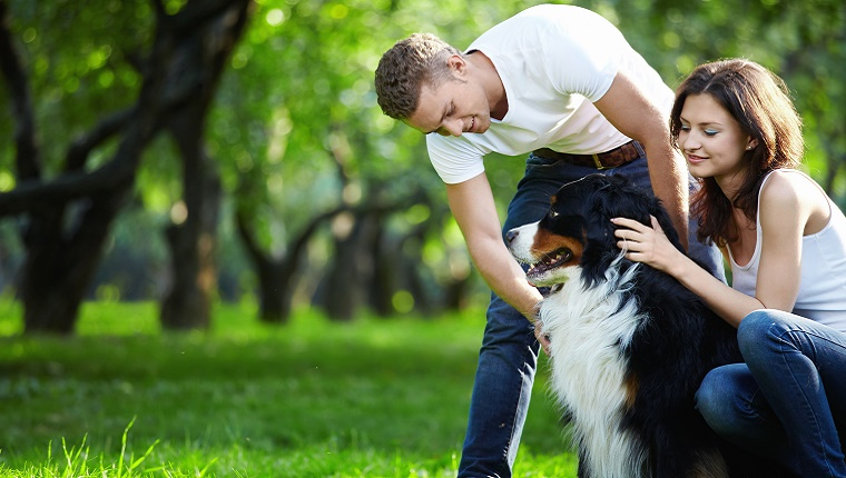 A couple pets a Bernese Mountain Dog in a park with lots of trees in the background.